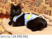Купить «Кот в разноцветной рубашке-повязке», фото № 24990042, снято 27 января 2017 г. (c) Александр Лебедев / Фотобанк Лори