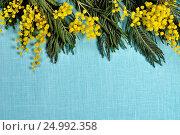 Купить «Mimosa flowers on the turquoise linen surface», фото № 24992358, снято 10 марта 2016 г. (c) Зезелина Марина / Фотобанк Лори