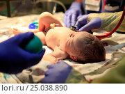 Купить «Новорожденный ребенок», фото № 25038890, снято 5 октября 2013 г. (c) Морозова Татьяна / Фотобанк Лори