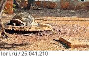 Черепаха в зоопарке. Стоковое фото, фотограф Наталья Гуреева / Фотобанк Лори