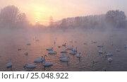 Купить «Лебединое озеро в Алтайском крае / Swans on Altai lake Svetloe in the evaporation mist at evening time in winter», видеоролик № 25048922, снято 25 января 2017 г. (c) Serg Zastavkin / Фотобанк Лори