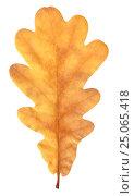 Осенний желтый дубовый лист. Стоковое фото, фотограф Ольга К. / Фотобанк Лори