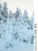 Купить «Winter Ukrainian Carpathian Mountains landscape.», фото № 25068486, снято 15 января 2017 г. (c) Юрий Брыкайло / Фотобанк Лори