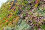 Succulent Plants Closeup., фото № 25069110, снято 16 мая 2016 г. (c) Юрий Брыкайло / Фотобанк Лори