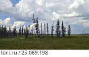 Time-lapse photography of passage storm front in the taiga on the Yamal Peninsula. Стоковое видео, видеограф Владимир Ковальчук / Фотобанк Лори