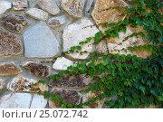 Купить «Вьющихся растение на каменной стене», фото № 25072742, снято 23 августа 2016 г. (c) Дмитрий Сидоров / Фотобанк Лори