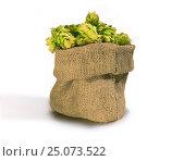 Купить «Шишки хмеля в тканом мешке», фото № 25073522, снято 26 августа 2016 г. (c) Валерий Тырин / Фотобанк Лори