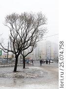 Купить «Санкт-Петербург. Оттепель. Два дерева», эксклюзивное фото № 25074758, снято 28 января 2017 г. (c) Александр Щепин / Фотобанк Лори