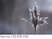 Купить «4 Season winter,beautiful,beauty of nature,blade of grass,calm,chilly,climate,closeup,closeup capture,closeup shot,cold,cold weather,countryside,covering...», фото № 25076718, снято 17 декабря 2016 г. (c) mauritius images / Фотобанк Лори