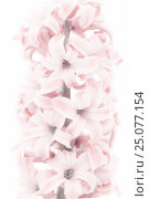 Купить «art,beautiful,beauty,bloom,blooming,blossom,blue hyacinth,botanical,botany,bouquet,bright,bulb,card,closeup,color,colorful,decoration,easter,floral,flower...», фото № 25077154, снято 16 декабря 2016 г. (c) mauritius images / Фотобанк Лори