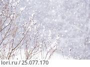 Купить «4 Season winter,beautiful,clean,cool,falling,Finland,freeze,fresh,frost,ice,nature,new,outdoor,pure white,rime,Scandinavia,scene,season,snow,snowfall,snowflake...», фото № 25077170, снято 3 января 2017 г. (c) mauritius images / Фотобанк Лори