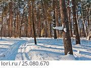 Лыжня, фото № 25080670, снято 4 февраля 2017 г. (c) Владимир Федечкин / Фотобанк Лори