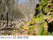 Купить «Ущелье реки Боса в Крыму. Весна», фото № 25084558, снято 29 марта 2014 г. (c) Выскуб Анна / Фотобанк Лори