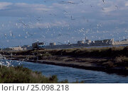 Купить «Lorry disturbs breeding seagull colony Aigues Mortes Camargue France», фото № 25098218, снято 26 мая 2018 г. (c) Nature Picture Library / Фотобанк Лори