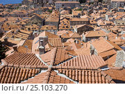 Купить «Terracotta tiled rooftops in the town of Dubrovnik, Croatia.», фото № 25103270, снято 18 августа 2018 г. (c) Nature Picture Library / Фотобанк Лори