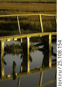 Купить «Raised wooden walkway over the salt marshes at Newtown Creek, Isle of Wight, UK. October 2004», фото № 25108154, снято 16 июля 2018 г. (c) Nature Picture Library / Фотобанк Лори