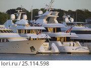 Купить «Superyachts moored in Newport, Rhode Island, USA», фото № 25114598, снято 8 декабря 2019 г. (c) Nature Picture Library / Фотобанк Лори