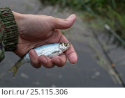 Рыба уклейка. Стоковое фото, фотограф Сергей Паникратов / Фотобанк Лори