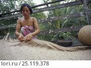 Купить «Iban woman at the Naga Sumpa longhouse plaiting a sleeping-mat, Sarawak, Borneo. 2002», фото № 25119378, снято 21 августа 2018 г. (c) Nature Picture Library / Фотобанк Лори