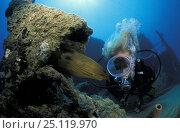 "Купить «Diver with green moray eel (Gymnothorax funebris) on wreck of ""Prince Albert"", Roatan, Honduras. Model released.», фото № 25119970, снято 16 января 2019 г. (c) Nature Picture Library / Фотобанк Лори"