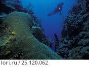 Купить «Mary's place dive site, Roatan, Honduras.», фото № 25120062, снято 16 января 2019 г. (c) Nature Picture Library / Фотобанк Лори