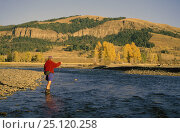 Купить «A man casting his line while fly fishing in shallow waters, Montana's Yellowstone National Park, USA. Model released.», фото № 25120258, снято 25 июня 2019 г. (c) Nature Picture Library / Фотобанк Лори