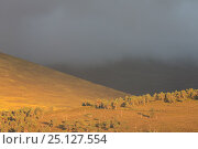 Купить «Evening light over lower Glenfeshie, Cairngorms National Park, Scotland, August 2013.», фото № 25127554, снято 18 августа 2018 г. (c) Nature Picture Library / Фотобанк Лори