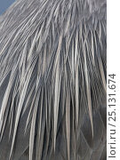 Купить «Great blue heron (Ardea herodias) feathers detail on back, Florida, USA, January.», фото № 25131674, снято 27 января 2020 г. (c) Nature Picture Library / Фотобанк Лори