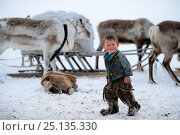 Купить «Young Nenet boy at camp wearing traditional winter boots made with reindeer skin. Reindeer (Rangifer tarandus) and sled in background. Yar-Sale district. Yamal, Northwest Siberia, Russia. April  2016.», фото № 25135330, снято 19 июля 2019 г. (c) Nature Picture Library / Фотобанк Лори