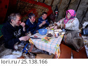 Купить «Nenet reindeer herders eating raw reindeer meat and tea in reindeer skin tent. Yar-Sale district, Yamal, Northwest Siberia, Russia. April 2016.», фото № 25138166, снято 21 ноября 2019 г. (c) Nature Picture Library / Фотобанк Лори