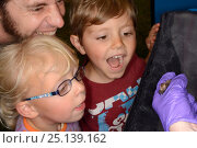Купить «Brown long-eared bat (Plecotus auritus) shown to two children and their father by Samantha Pickering at a public outreach event, Boscastle, Cornwall, UK, October 2015. Model released.», фото № 25139162, снято 25 марта 2019 г. (c) Nature Picture Library / Фотобанк Лори