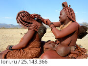Купить «Himba women braiding each other's hair. Marienfluss Valley. Kaokoland, Namibia October 2015», фото № 25143366, снято 21 ноября 2019 г. (c) Nature Picture Library / Фотобанк Лори