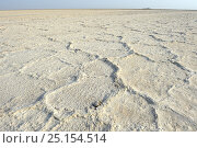 Salt formation of the Lake Assale, Danakil Depression, Afar region, Ethiopia, March 2015. Стоковое фото, фотограф Eric Baccega / Nature Picture Library / Фотобанк Лори