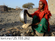 Купить «Afar tribe woman baking bread with a hot stone, Malab-Dei village, Danakil depression, Afar region, Ethiopia, March 2015.», фото № 25155262, снято 5 августа 2020 г. (c) Nature Picture Library / Фотобанк Лори