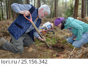 Купить «Roger Trout and Jia Ming Lim excavating the hibernation burrow of  an Edible / Fat Dormouse (Glis glis) in woodland where this European species has become...», фото № 25156342, снято 24 октября 2018 г. (c) Nature Picture Library / Фотобанк Лори