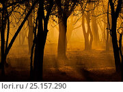 Купить «Sunrise in forest, silhouetting trees. Ranthambhore Tiger Reserve, India.», фото № 25157290, снято 17 сентября 2018 г. (c) Nature Picture Library / Фотобанк Лори