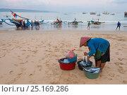 Купить «Fishermen and buyers on the beach, Bali, Indonesia, August 2014.», фото № 25169286, снято 25 сентября 2018 г. (c) Nature Picture Library / Фотобанк Лори