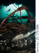 Scuba diver, surrounded by shoal of fish, above  tree roots in a cenote in the middle of the jungle, Riviera Maya, Yucatan Peninsula, Mexico. Model released. Стоковое фото, фотограф Brandon Cole / Nature Picture Library / Фотобанк Лори
