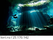 Scuba divers swim into a curtain of light shining down through the opening to a cenote, Riviera Maya, Yucatan Peninsula, Mexico. Model released., фото № 25170142, снято 21 сентября 2017 г. (c) Nature Picture Library / Фотобанк Лори