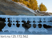 Купить «Unusual shaped icicles, Selbusjoen, Norway, January.», фото № 25172562, снято 23 сентября 2018 г. (c) Nature Picture Library / Фотобанк Лори