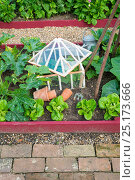 Купить «Courgettes, lettuce and cucumber growing in small raised bed with antique cloche, England, July.», фото № 25173666, снято 18 декабря 2017 г. (c) Nature Picture Library / Фотобанк Лори