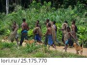 Купить «Ba'Kola Pygmies with traditional duiker hunting nets. Mbomo, Odzala-Kokoua National Park, Republic of Congo (Congo-Brazzaville), Africa, June 2013.», фото № 25175770, снято 15 декабря 2017 г. (c) Nature Picture Library / Фотобанк Лори