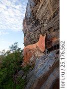 Купить «The 'mirror wall' which was once so highly polished that it was reflective. Sigiriya, Sri Lanka, December 2012.», фото № 25176562, снято 19 августа 2018 г. (c) Nature Picture Library / Фотобанк Лори