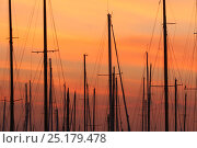 Купить «Masts of sail boats in harbour at sunset. All non-editorial uses must be cleared individually.», фото № 25179478, снято 23 мая 2018 г. (c) Nature Picture Library / Фотобанк Лори