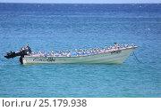 Купить «Laughing gulls (Larus atricilla) resting on boat. Tobago, West Indies.», фото № 25179938, снято 19 июля 2019 г. (c) Nature Picture Library / Фотобанк Лори