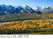 Купить «Forest in autumn with mountain peaks beyond, Lake Baikal, Siberia, Russia, October 2010.», фото № 25180170, снято 15 августа 2018 г. (c) Nature Picture Library / Фотобанк Лори