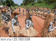 Купить «Mbuti Pygmy boys in traditional blue body paint and straw skirts, on way to forest to undergo initiation ceremony, which is a right of passage into manhood...», фото № 25183038, снято 3 марта 2020 г. (c) Nature Picture Library / Фотобанк Лори