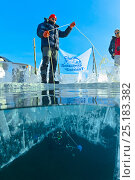 Купить «Support team on the surface of the ice helping diver below. Lake Baikal, Russia, March 2013.», фото № 25183382, снято 24 февраля 2019 г. (c) Nature Picture Library / Фотобанк Лори