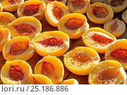 Купить «Halved Peaches (Prunus persica) drying on tray outside in the sun. Suikerbossie farm, Koue Bokkeveld / Cedarberg region, Western Cape, South Africa.», фото № 25186886, снято 17 июня 2019 г. (c) Nature Picture Library / Фотобанк Лори