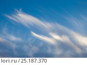 Купить «Cirrus uncinus or Mares' Tails cloud formations, Isle of Mull, UK.», фото № 25187370, снято 20 апреля 2018 г. (c) Nature Picture Library / Фотобанк Лори
